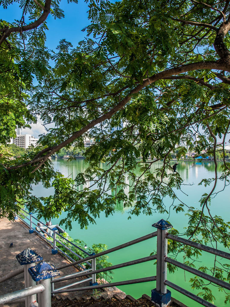 beira lake behind tree leaves colombo