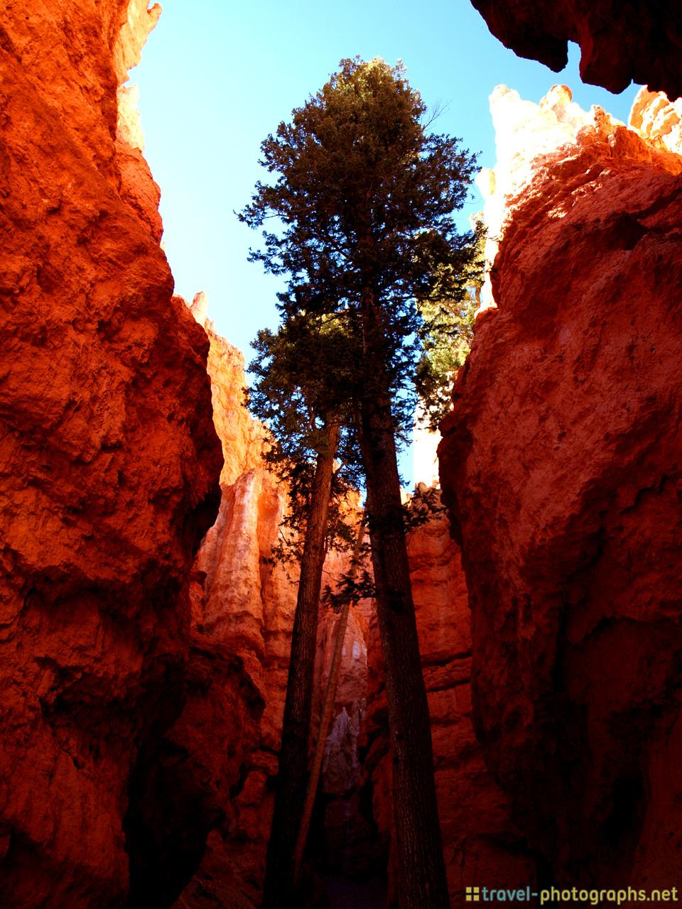 bryce-canyon-national-park-tree-valley