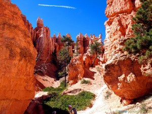 bryce-canyon-trees-inside-rocks