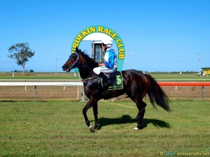 burdekin-race-club-horse