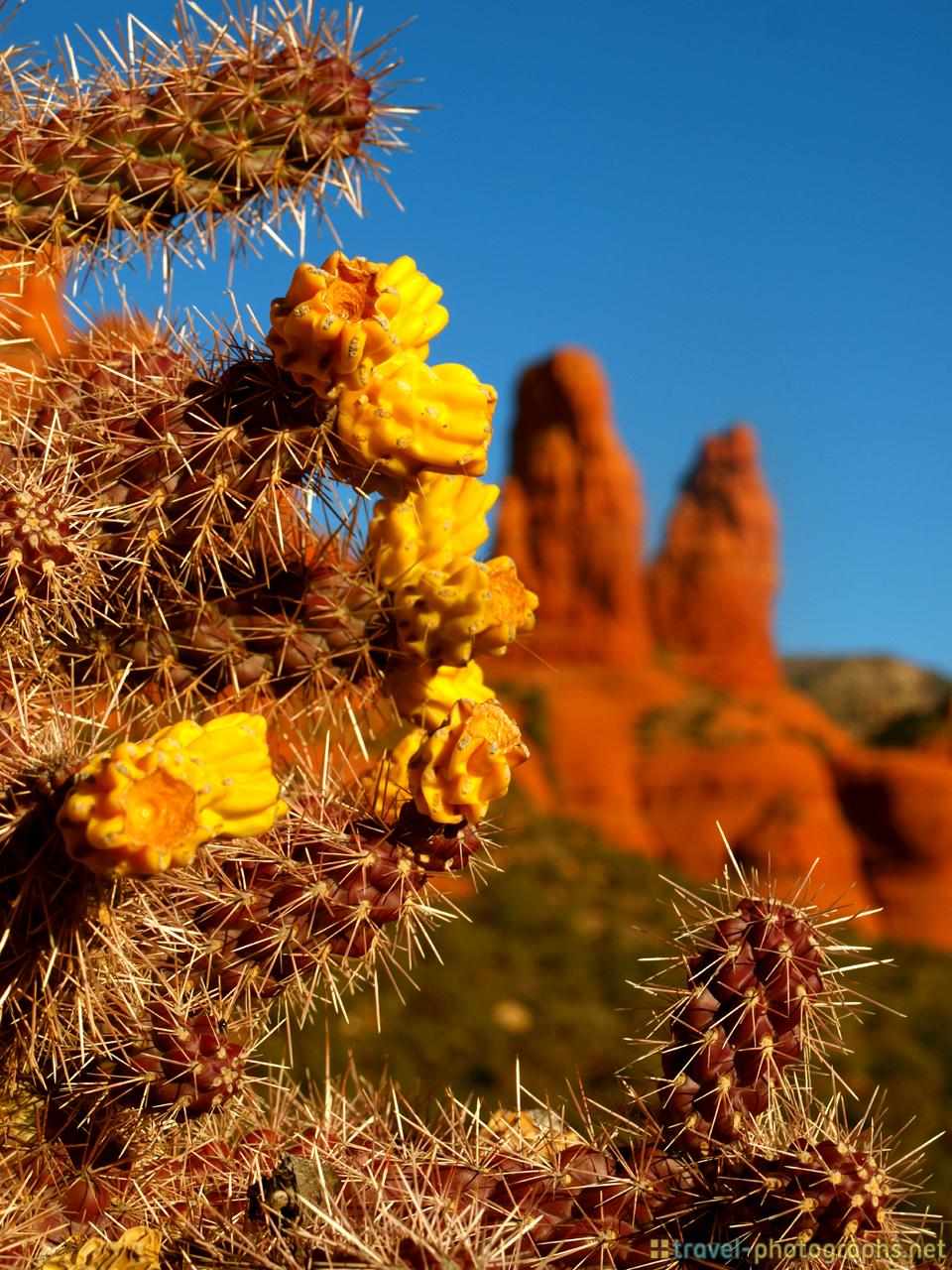 cactus-red-rock-canyon-sunset-sedona-arizona