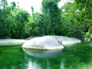 green-water-and-rocks-australian-jungle