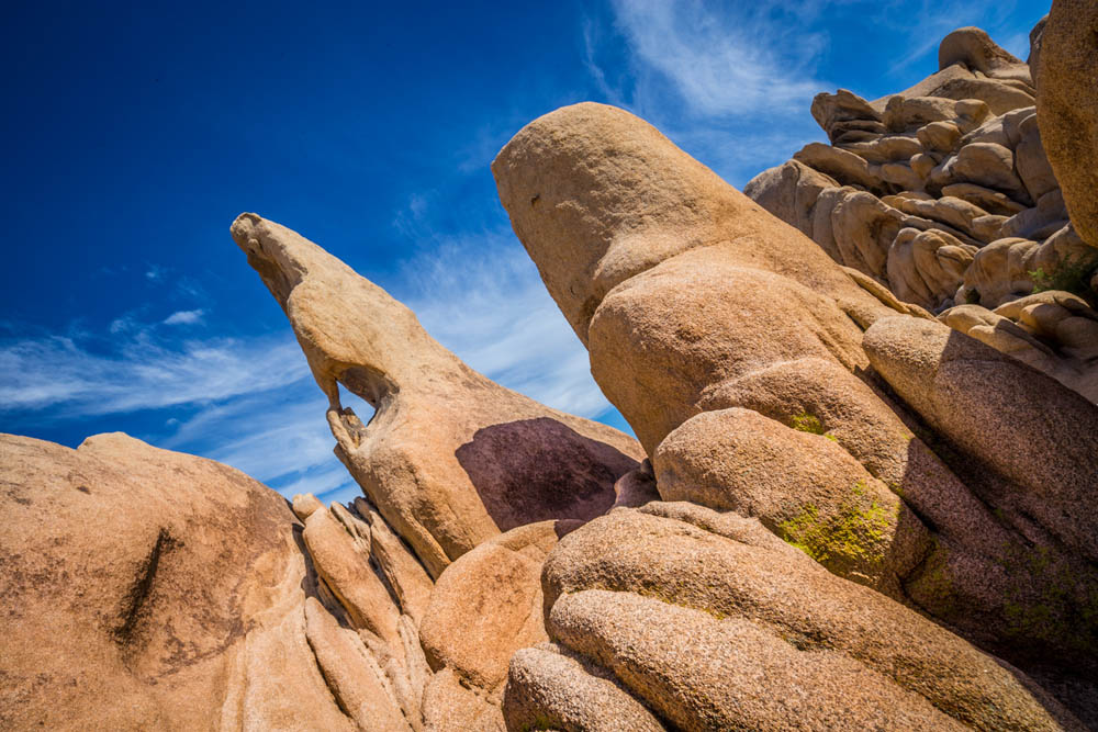 hike joshua tree national park