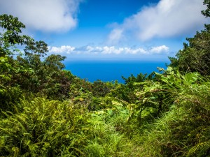hiking on saba in the rainforest