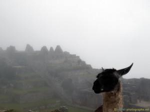 machu-picchu-alpaca-sheep-peru