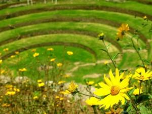 moray-ruins-flowers-peru
