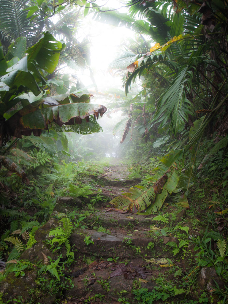 mount scenery stairs on saba hike