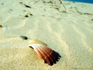 shell-on-lonely-island-gold-coast-sand
